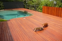 hardwood pooldeck